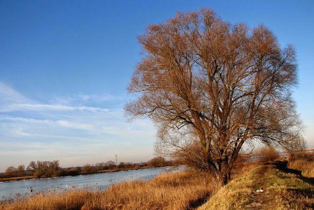 Jak wyciąć drzewo lub krzew zgodnie z przepisami?