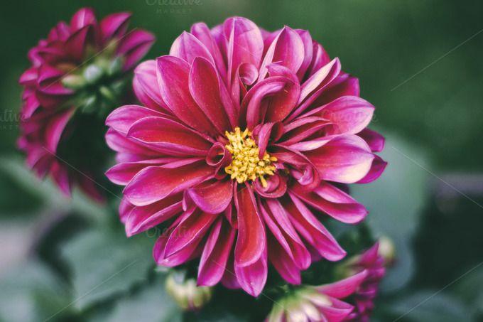 Flower - Matte by Hombre-cz on @creativemarket