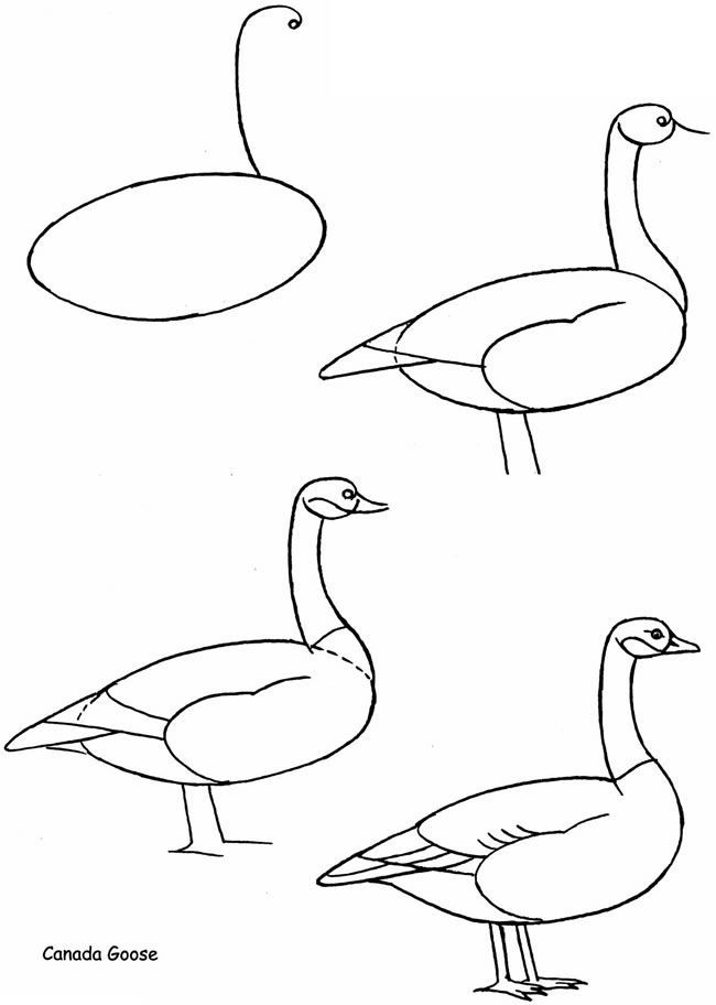 How to Draw Birds: Dover Publications Samples - How to draw Canada Goose