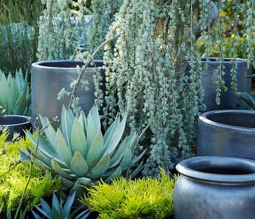 Flora Grubb Gardens // Pot & Containers