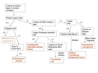 26 List Of Top Bacteria Identification Flow Chart Images