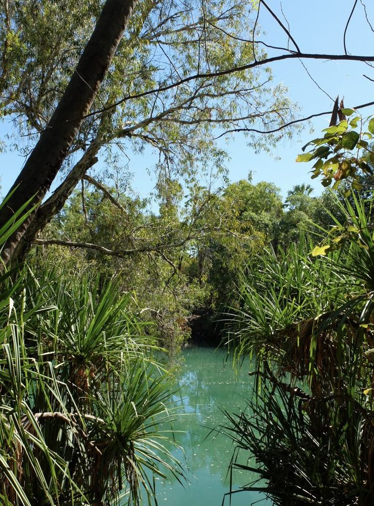 The gorgeous emerald green waters of Boodjamulla National Park in Outback Queensland, Australia.