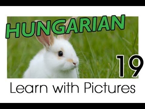 Learn Hungarian Vocabulary with Pictures - Farm Animals