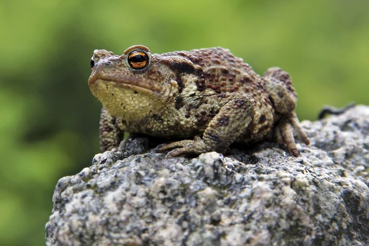 Frog or Toad? The Commonly Confused Animals Quiz
