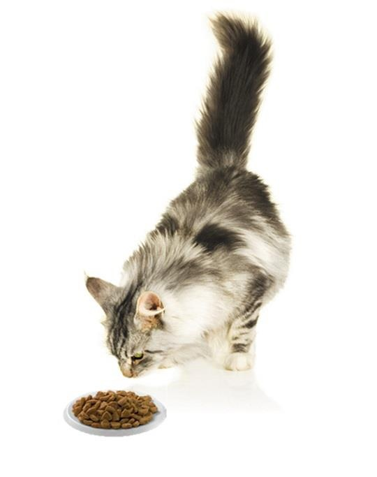 Ca un expert al sanatatii pisicesti recomand cu incredere PURINA One.