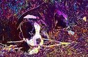 """New artwork for sale! - """" Dog Boxer Puppy Black And White  by PixBreak Art """" - http://ift.tt/2v3rwnO"""