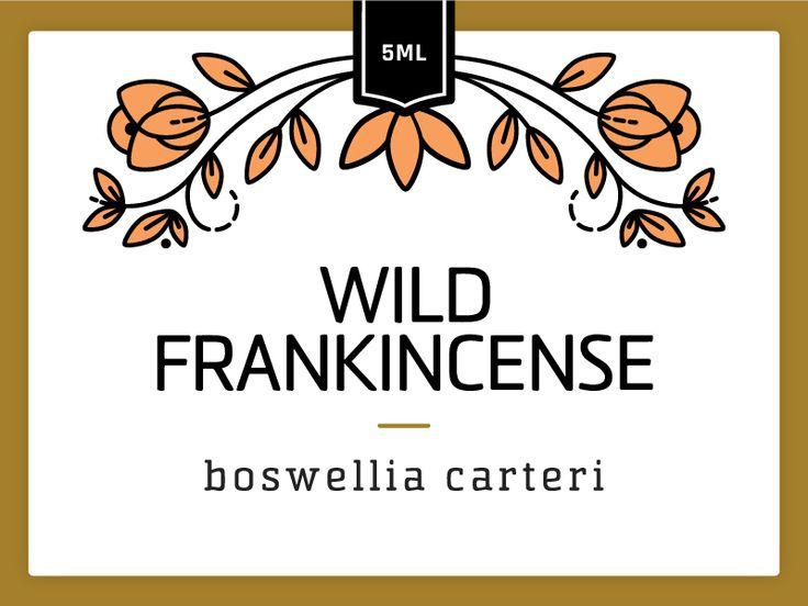 Wild Frankincense by Hilary Clarcq