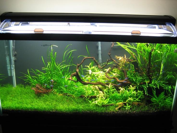 Pretty low-tech planted tank