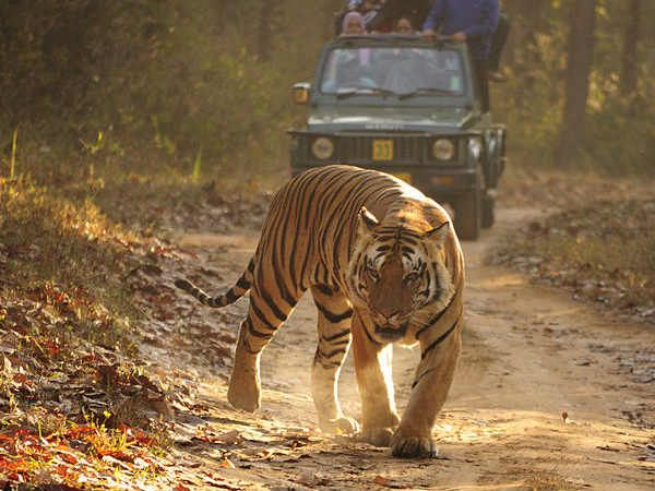 Top 7 Safari Parks in India