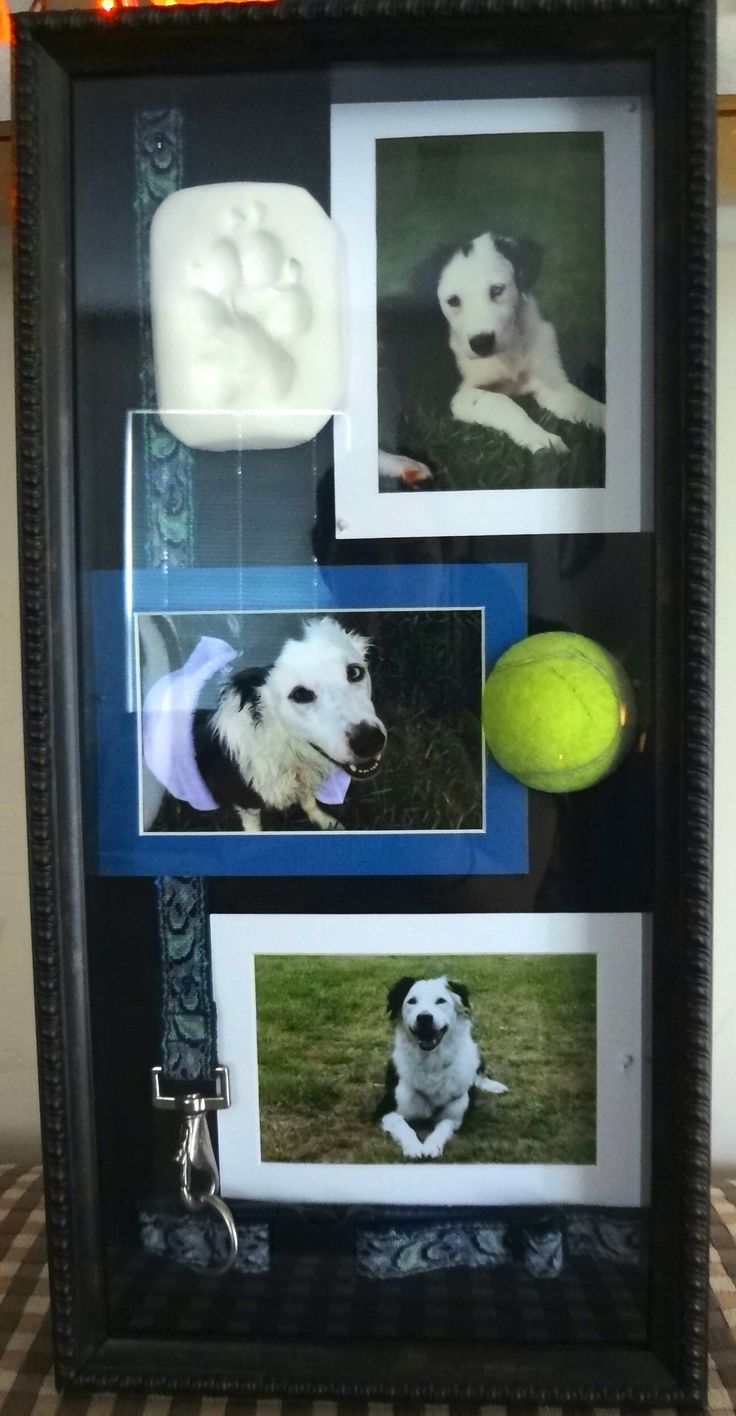 Memory Shadow Box, Dog Pictures, Matts, Mold-able Paw Print and Felt Display Frame from Michaels