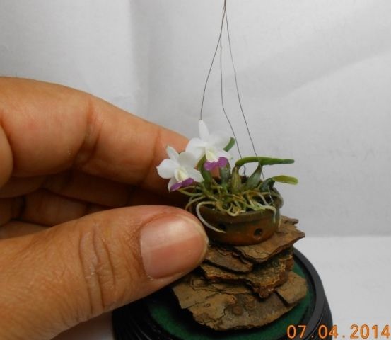 830 Best Images About Orchid Photos On Pinterest Rare