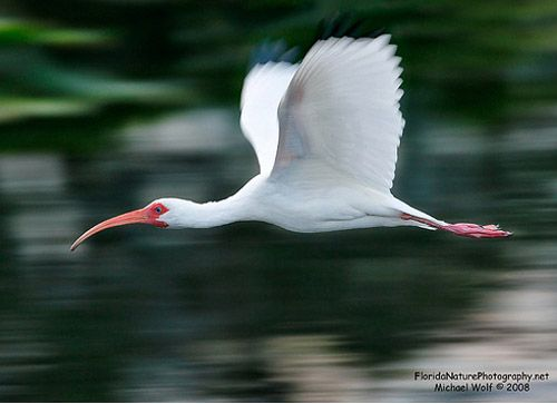 This photo of the bird has motion by panning. This is when move from left to right/right to left.