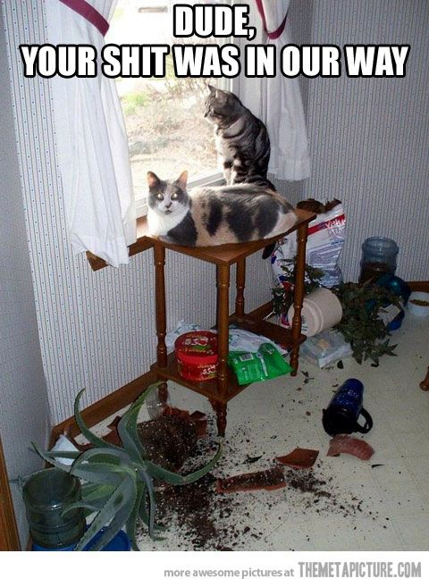 Hahaha cats...