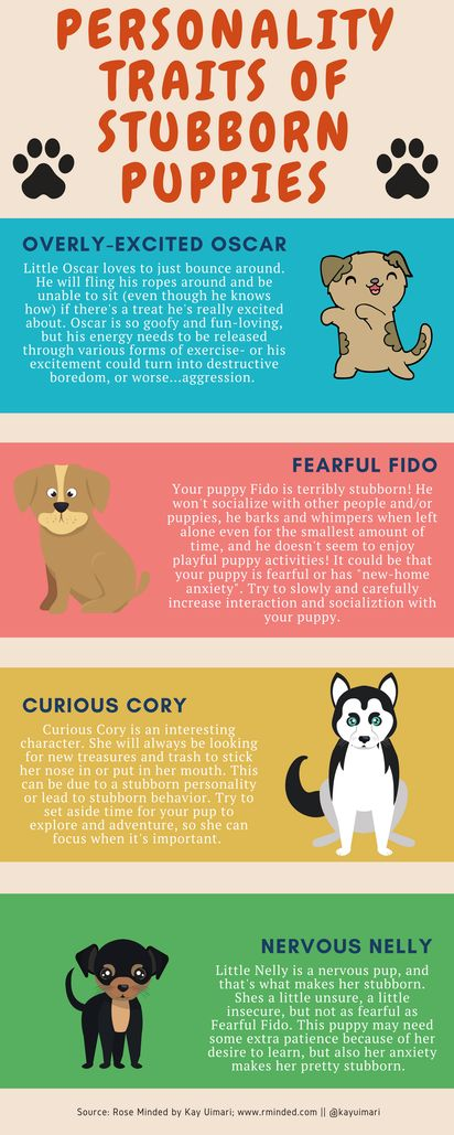 Personality Traits of Stubborn Puppies | puppy training | dog breed types | tips and tricks for raising a puppy | dog mom blog | puppy training infographic | please share dog moms!