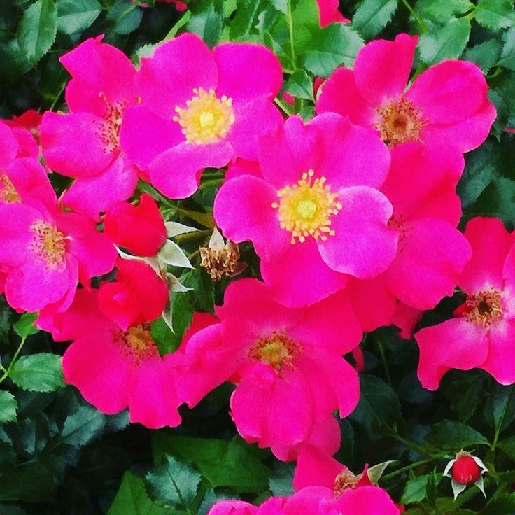 #lato #kwiaty #dianapozytywnie
