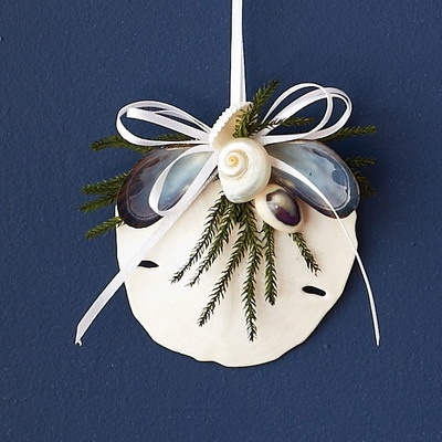 sand dollar craft ideas 28 best images about sand dollar projects on 5361