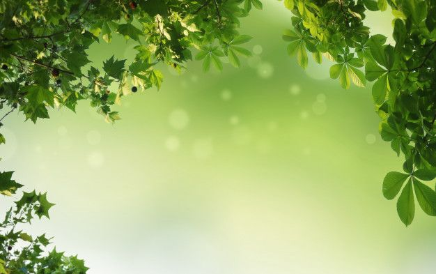 Green Natural Background Greenery Background