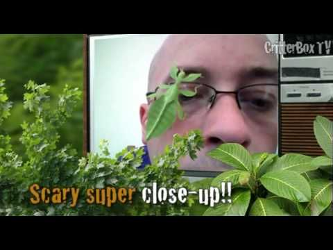 CritterboxTV Episode 3 Smooch the Bosc Monitor Lizard video