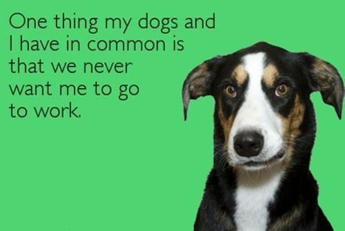 Haha! My dogs don't care, but at least it's half right!