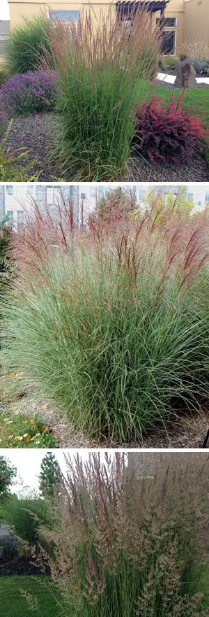 Ornamental Grasses: Update Your Curb Appeal with Just One Plant!