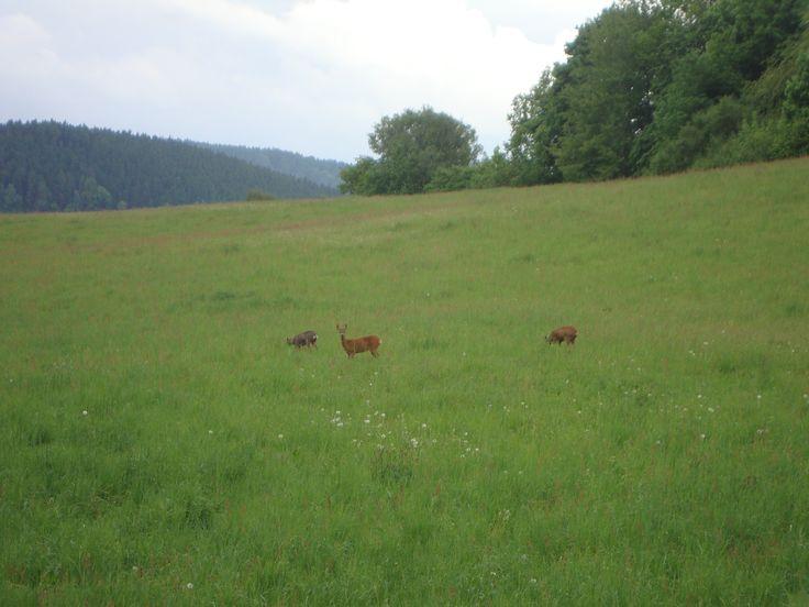 Herten spotten vanaf het terras
