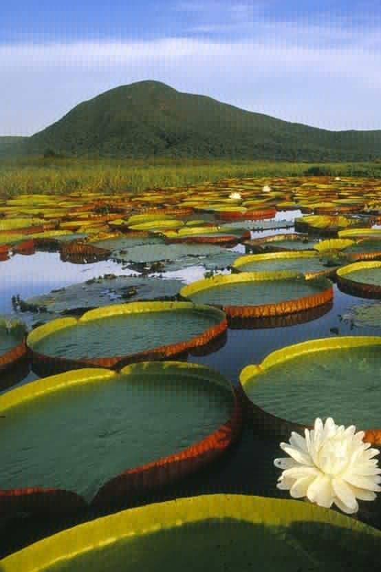 Pantanal Matogrossense - Brasil