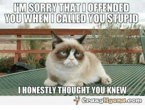 Pin By Karma On Grumpy Cat Memes Funny Grumpy Cat Memes
