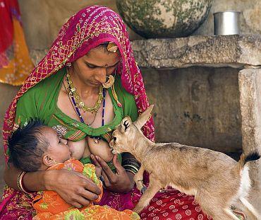 bishnoi family with adopted indian gazelle (or: chinkara) | rajasthan | foto: vijay bedi