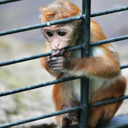 Tell Air Canada airlines to stop transporting monkeys to medical research facilities in sub-par conditions.