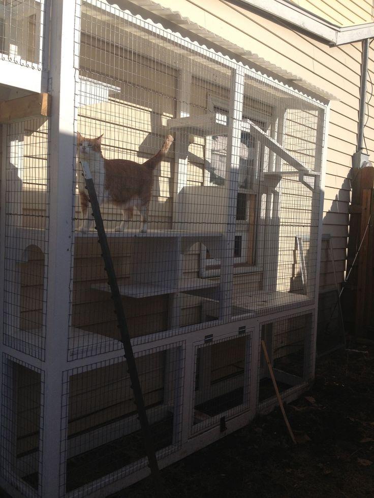 429 Best Images About Outdoor Cat Enclosure On Pinterest