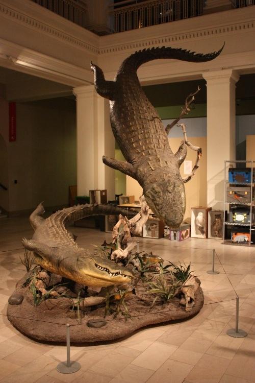 amazing taxidermy mount of crocs, carnegie museum