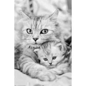 Mommy cat with kitten: Sweet, Mothers, Cutecat, Baby Kittens, Cute Cat, Baby Animal, Babycat, Green Eye, Baby Cat