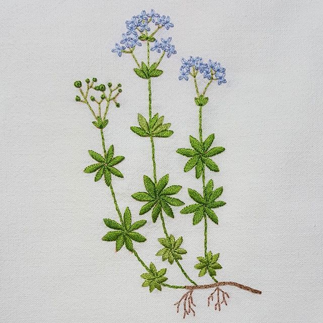 Sweet woodruff #프랑스자수 #자수타그램 #자수 #꽃자수 #꽃 #가리개 #커튼 #가리개커튼 #아오키카즈코 #정원꽃자수 #embroidery #sewing #handmade #needlework #flower #curtain