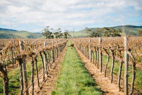 Note to self: add to travel bucket list, wine tasting in Australia.