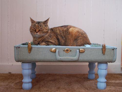 25 best ideas about homemade cat beds on pinterest homemade cat trees diy cat scratching. Black Bedroom Furniture Sets. Home Design Ideas