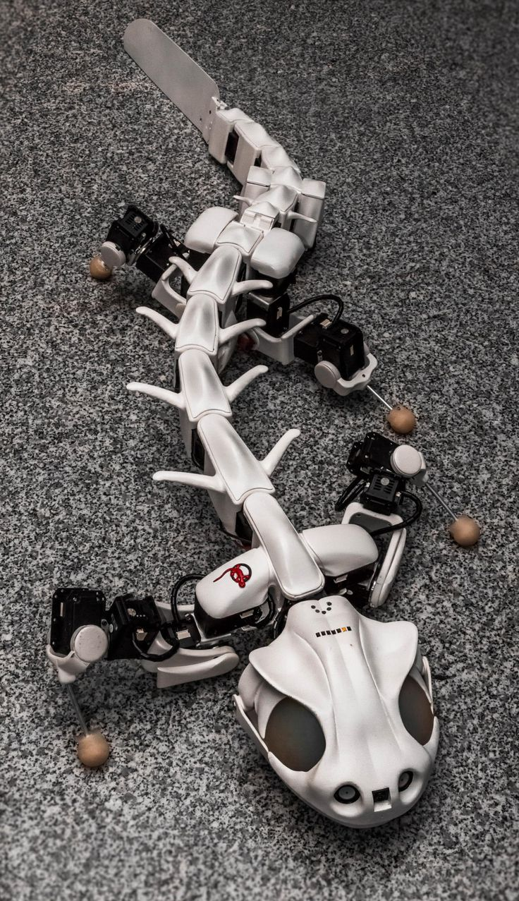 """A video showing """"multimodal locomotion in a bioinspired robot"""" has been making the rounds, and the video demonstrates advances in robotics as scientific tools as well as potential robots for search and rescue operations. Its name is Pleurobot."""
