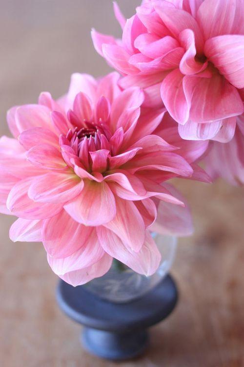 flowers devine wallpaper - photo #13