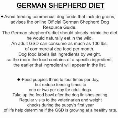 boxers diet