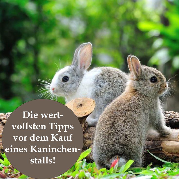 Größe, Funktionalität und Qualität sind wichtige Kriterien, die man vor dem Kauf eines Kaninchenstalls unbedingt beachten sollte. Ebenfalls ist es wichtig, alles über den geeigneten Standort des Hasenkäfigs zu wissen, damit Ihre Kaninchen lange gesund und munter sind. Erfahren Sie hier die wertvollsten Tipps vor dem Kauf eines Kaninchenstalls!