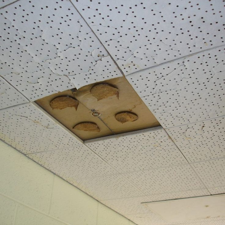 Best 25+ Acoustic ceiling tiles ideas on Pinterest | Acoustic ceiling panels, Ceiling tiles ...