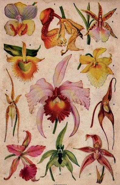 orquideas de itamar