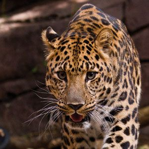 Philadelphia Zoo Discount Admission Tickets   Philadelphia CityPASS® Attraction