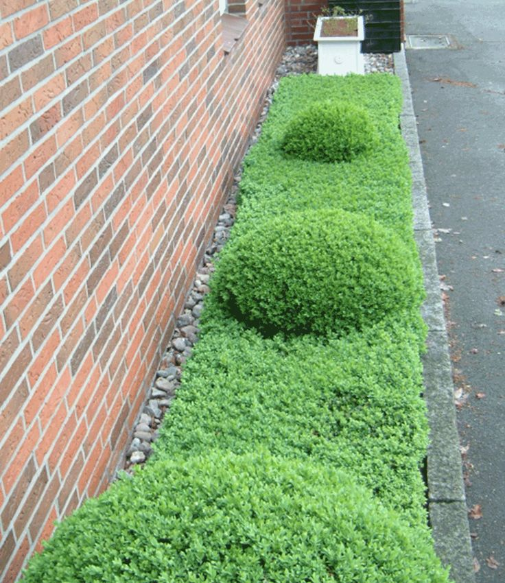 17 best images about buchsbaum im garten on pinterest gardens topiary garden and tuin - Buchsbaum garten ...