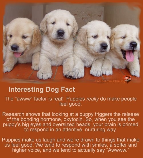 Interesting facts about pet dogs