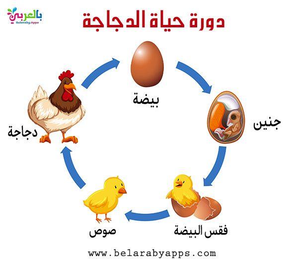 رسم دورة حياة الحيوانات للاطفال مراحل نمو الحيوان بالصور بالعربي نتعلم Animal Life Cycles Life Cycles Biology For Kids