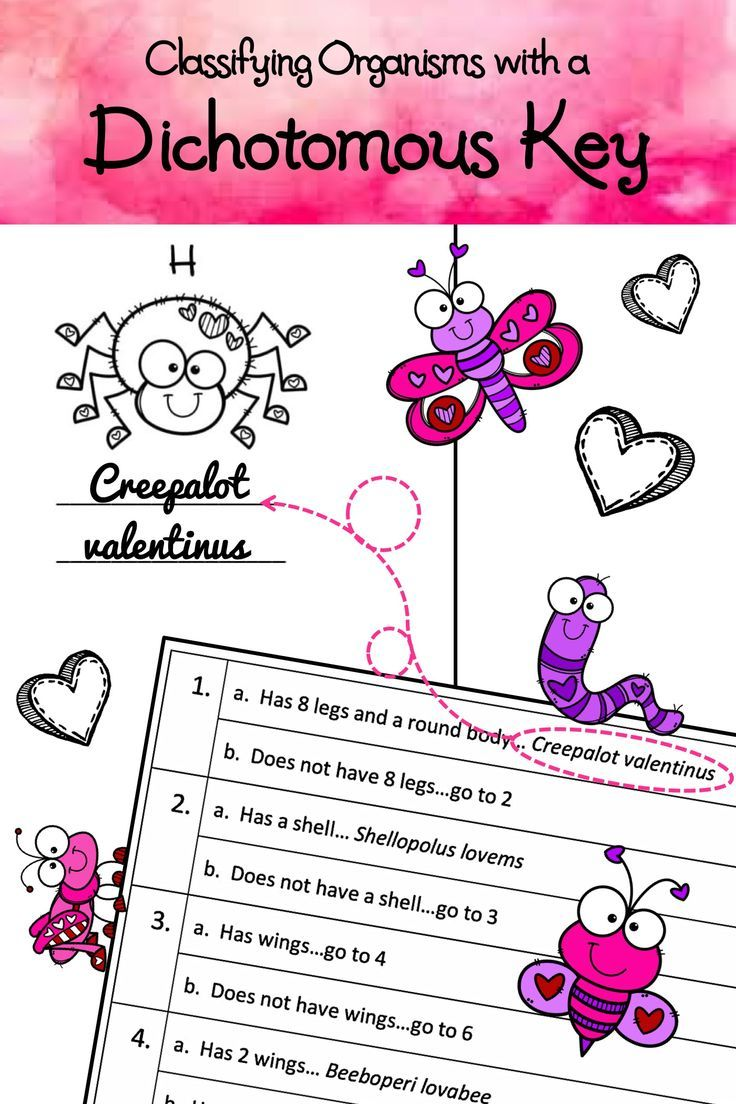 Valentine S Day Activity Classifying Organisms With A Dichotomous Key In 2020 Dichotomous Key Free Science Worksheets Science Activities