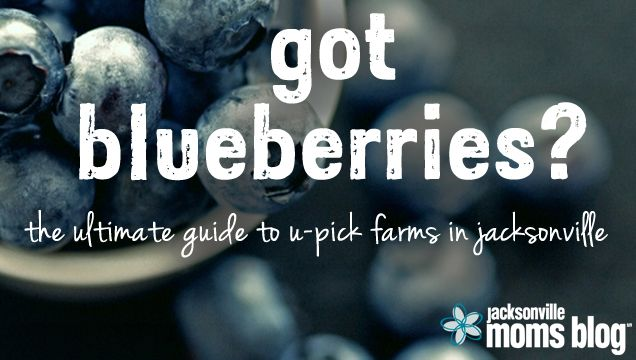 The Ultimate Guide to U-Pick Blueberry Farms in Jacksonville