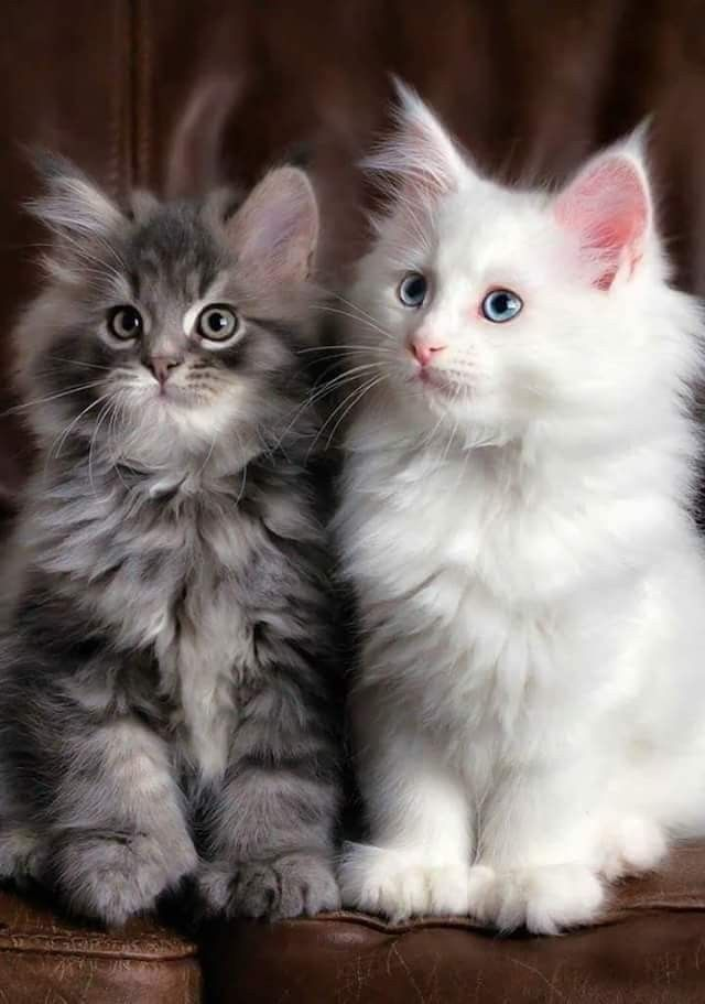 Pin By Kitty Lover Gifts On Catty Kittens Cutest Cute Cats Cute Animals