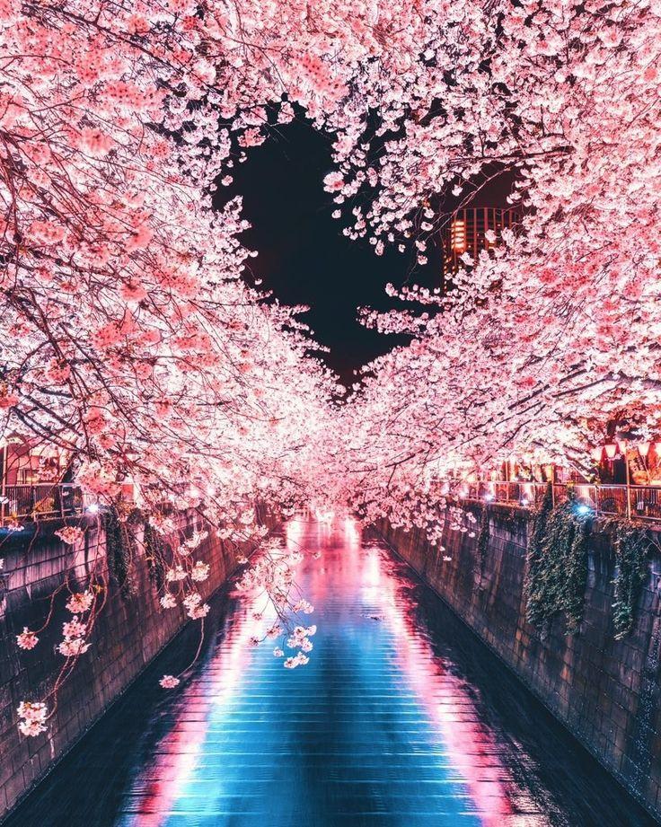 Das war's Schau! Ein Herz besteht aus Kirschblüten .- # Sakura # Schau mal hier …