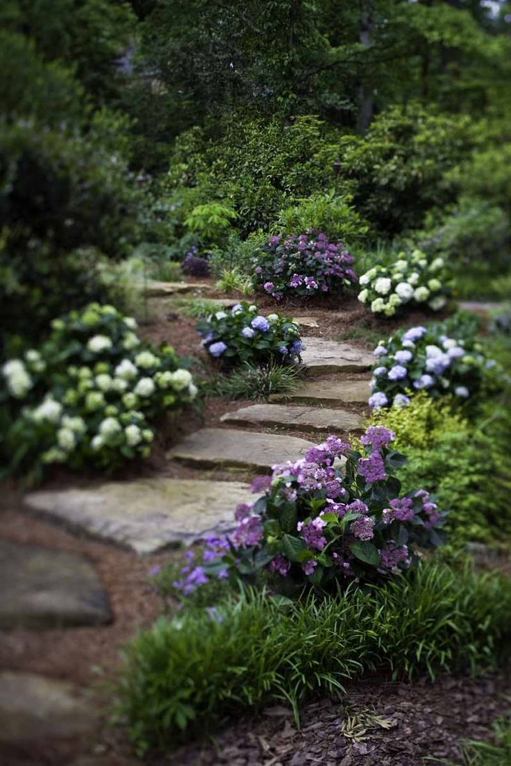 Gardens  Endless summer blooms along a stoneBest 25  Stepping stone walkways ideas on Pinterest   Stepping  . Garden Paths And Stepping Stones. Home Design Ideas